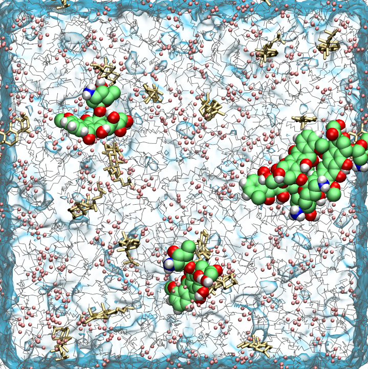 Doxorubicin bound to the surface of a POPC: CLR (9:1) bilayer
